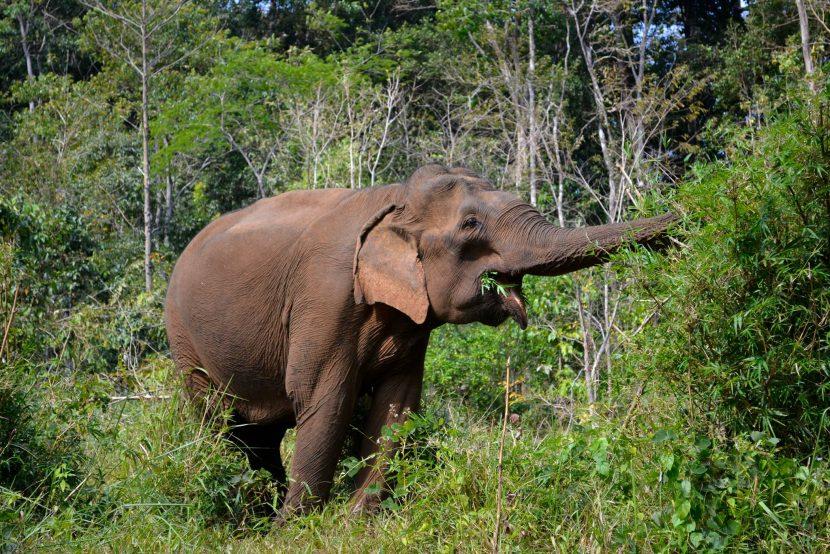 Primul parc din Vietnam care renunță la exploatarea elefanților