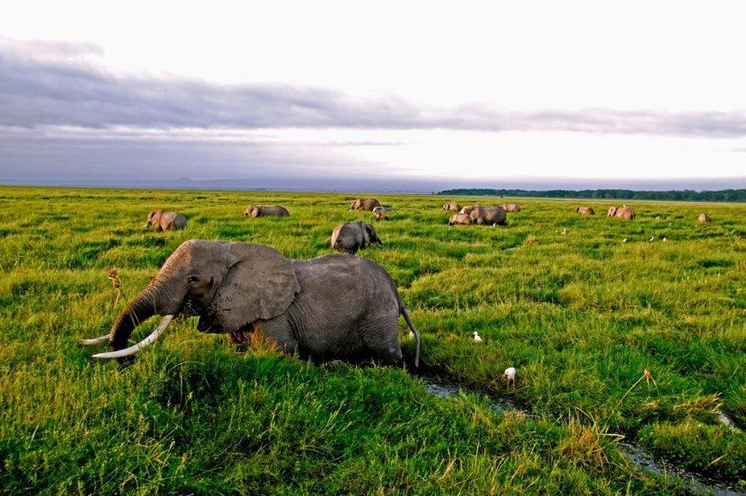 WWF: 60% din populația de vertebrate sălbatice a dispărut în 44 de ani