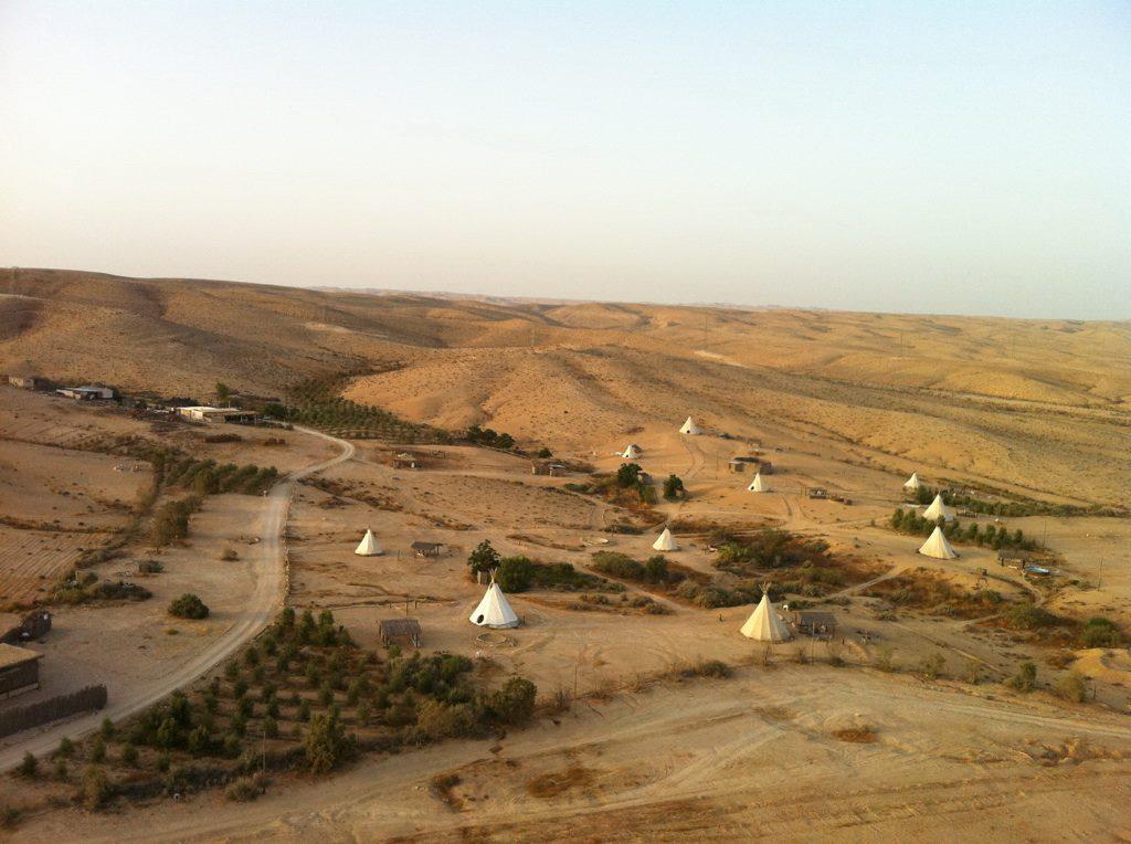 Desert Olive Farm, Negev Desert, Israel