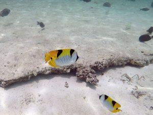 Villingilivaru Island - Ranveli Island Resort - South Ari Atoll, Maldives
