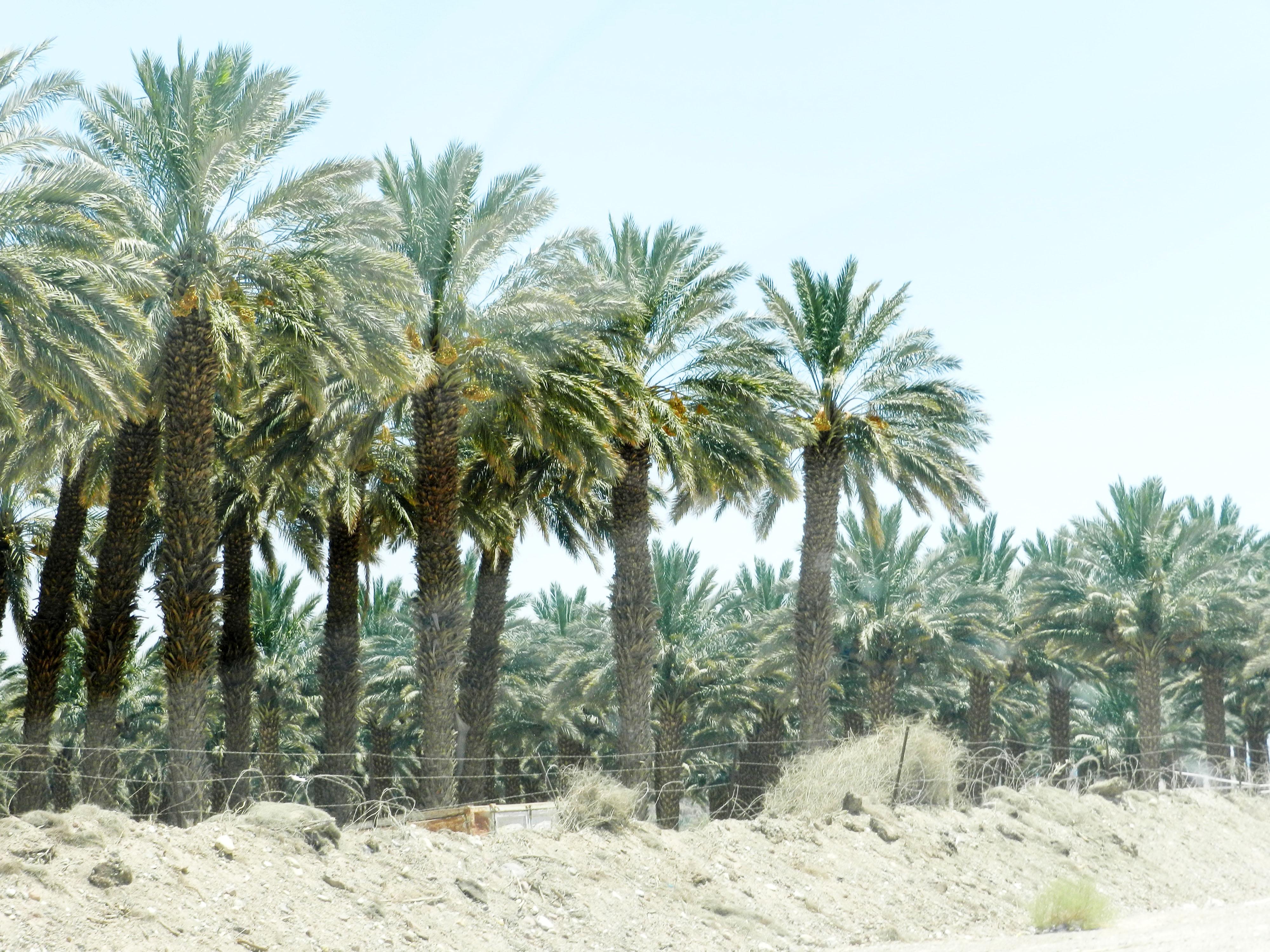 Arava, Negev Desert, Israel