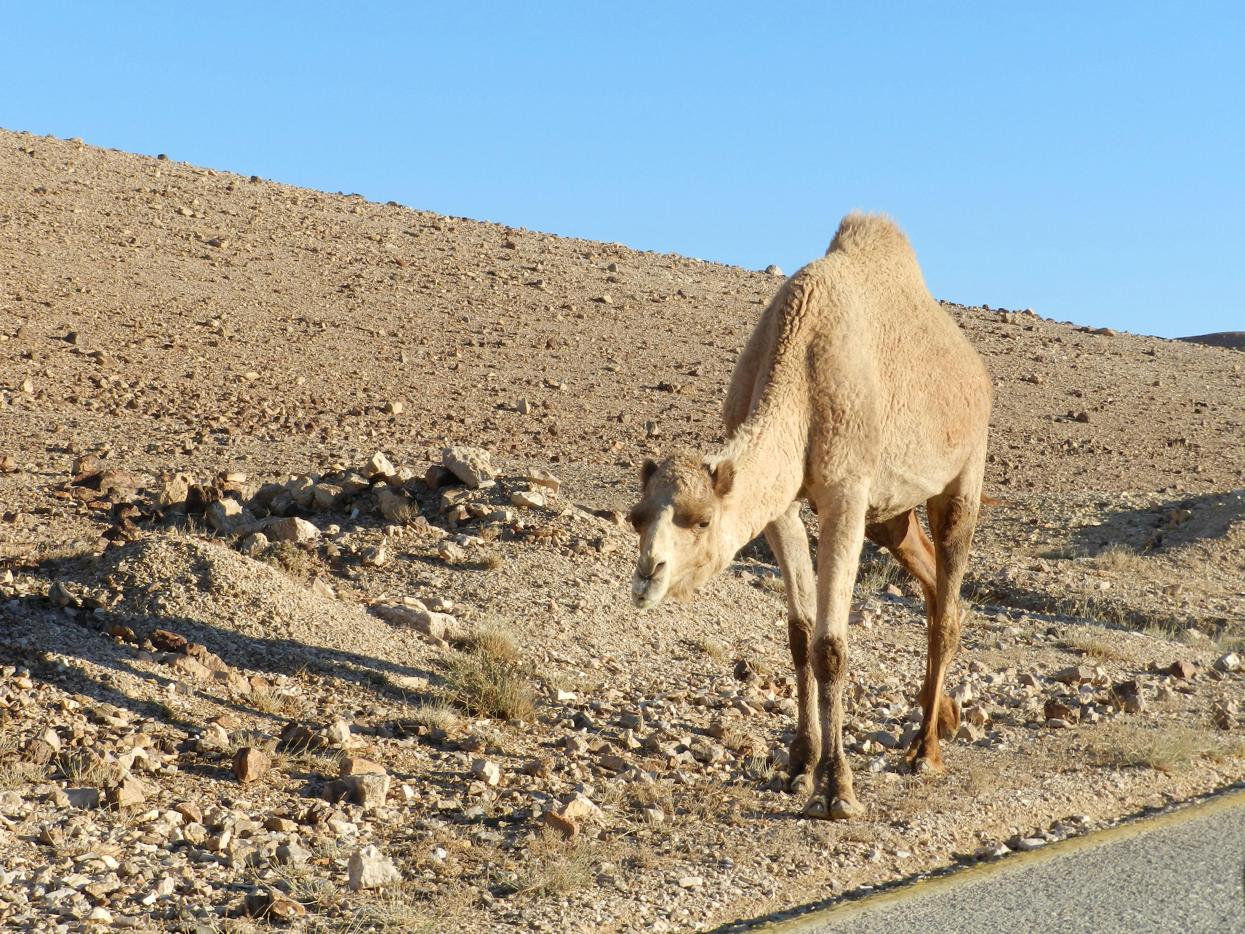 Negev Desert, Israel