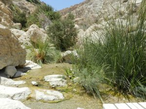 Ein Gedi Nature Reserve, Desert Negev, Israel
