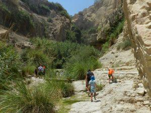 Ein Gedi Nature Reserve, Negev Desert, Israel