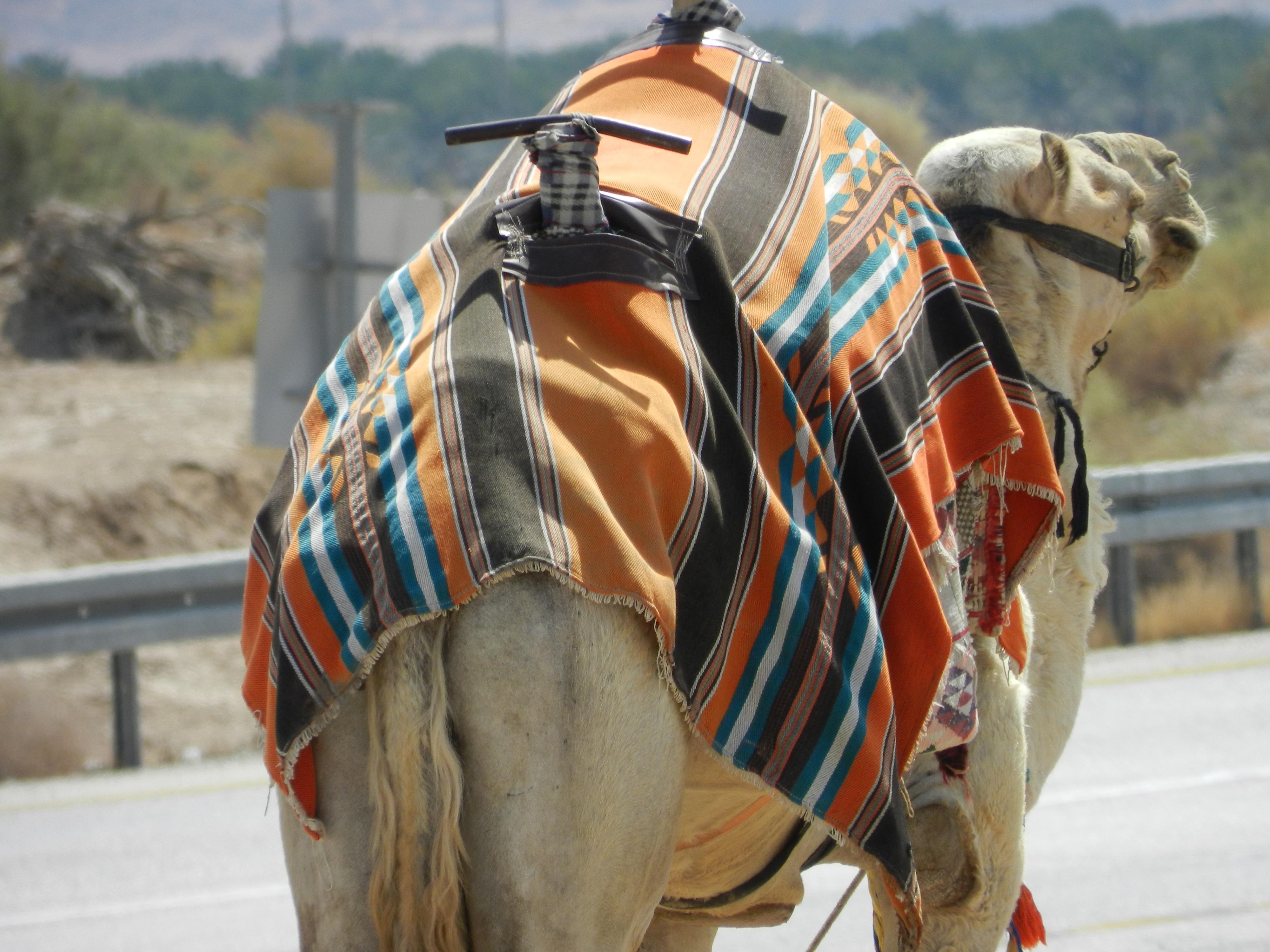 Desert Negev, Israel