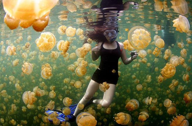 Faimosul lac cu milioane de meduze aurii, redeschis turiștilor