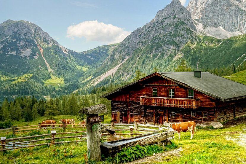 Austria| Ghid pentru turiștii care se întâlnesc cu vaci pe traseele alpine