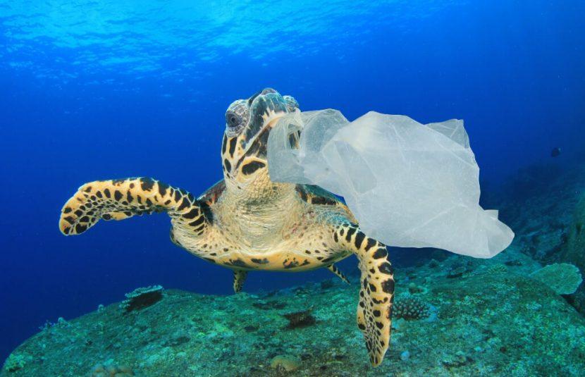 TANZANIA | Amenzi pentru turiștii care aduc pungi de plastic în țară
