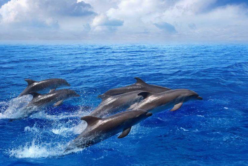 GRECIA | Se deschide primul sanctuar pentru delfinii salvați din captivitate