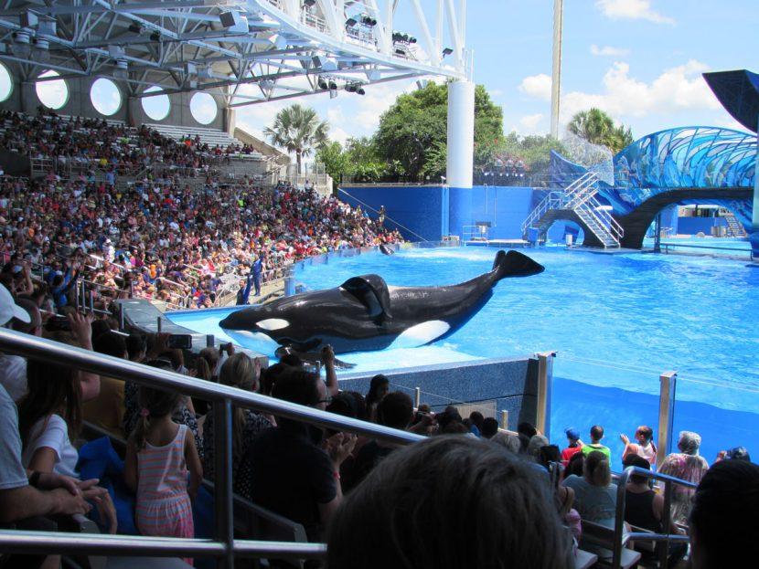 Turoperatorul Virgin Holidays renunță la colaborarea cu parcurile care dețin balene și delfini în captivitate
