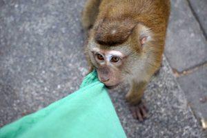 Monkey Hill, Phuket Town