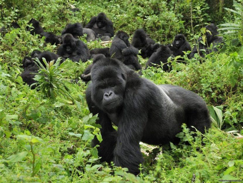 RWANDA | Revelația din topul destinațiilor de vacanță, în 2020