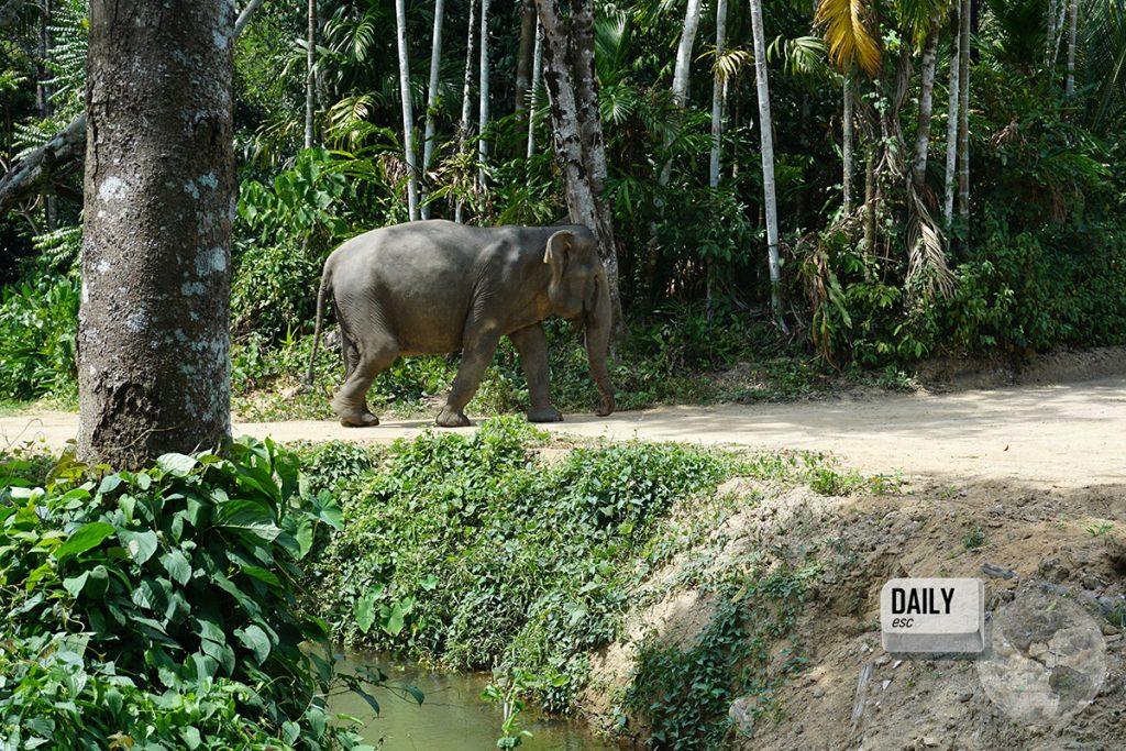 Phuket Elephant Sanctuary, Phuket Island, Thailand